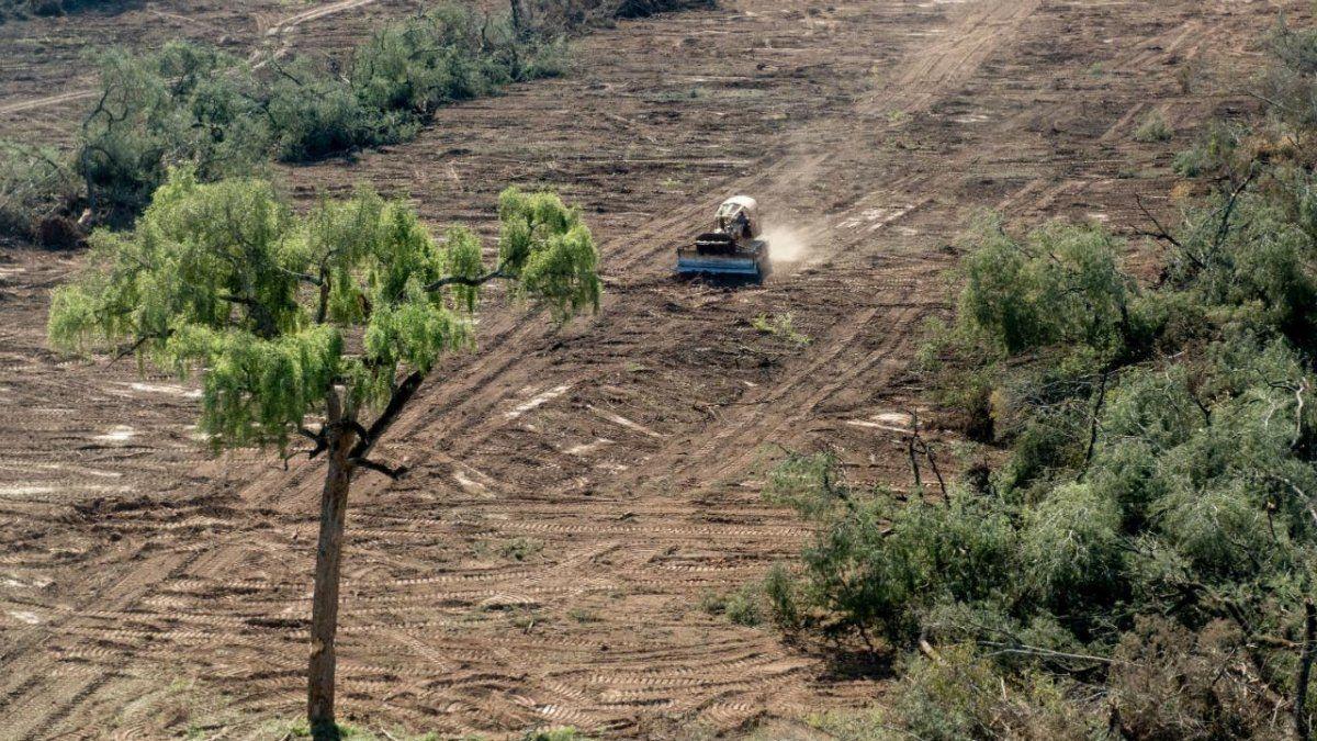 Los desmontes en Salta se llevaron puestas 800 mil hectáreas de monte en solo 15 años.