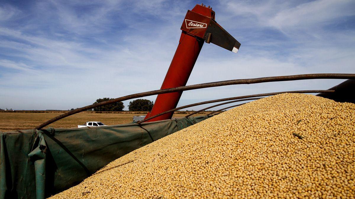 La cosecha gruesa estiman que permitirá recolectar 35