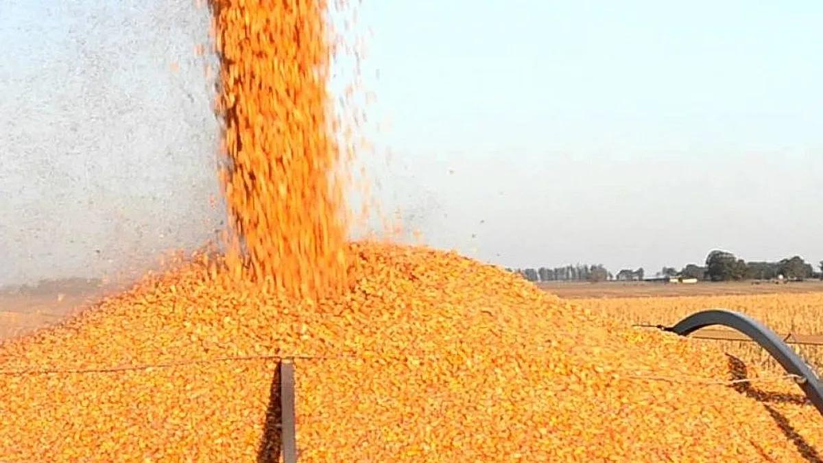 El ministro Domínguez vaticinó un récord en producción de maíz.